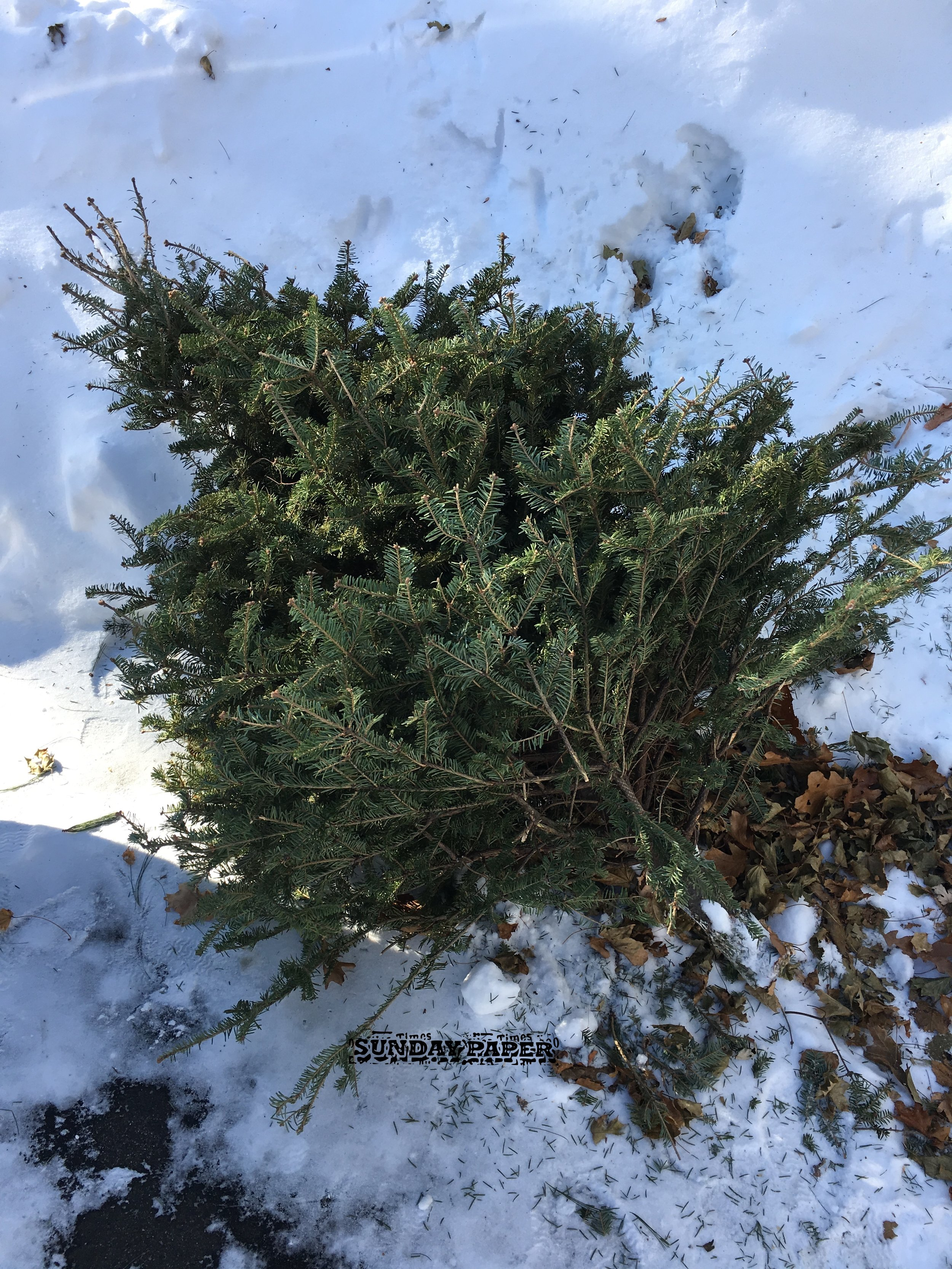 Getting the Christmas tree out of the house is just one of the events that makes this weekend distinctive.