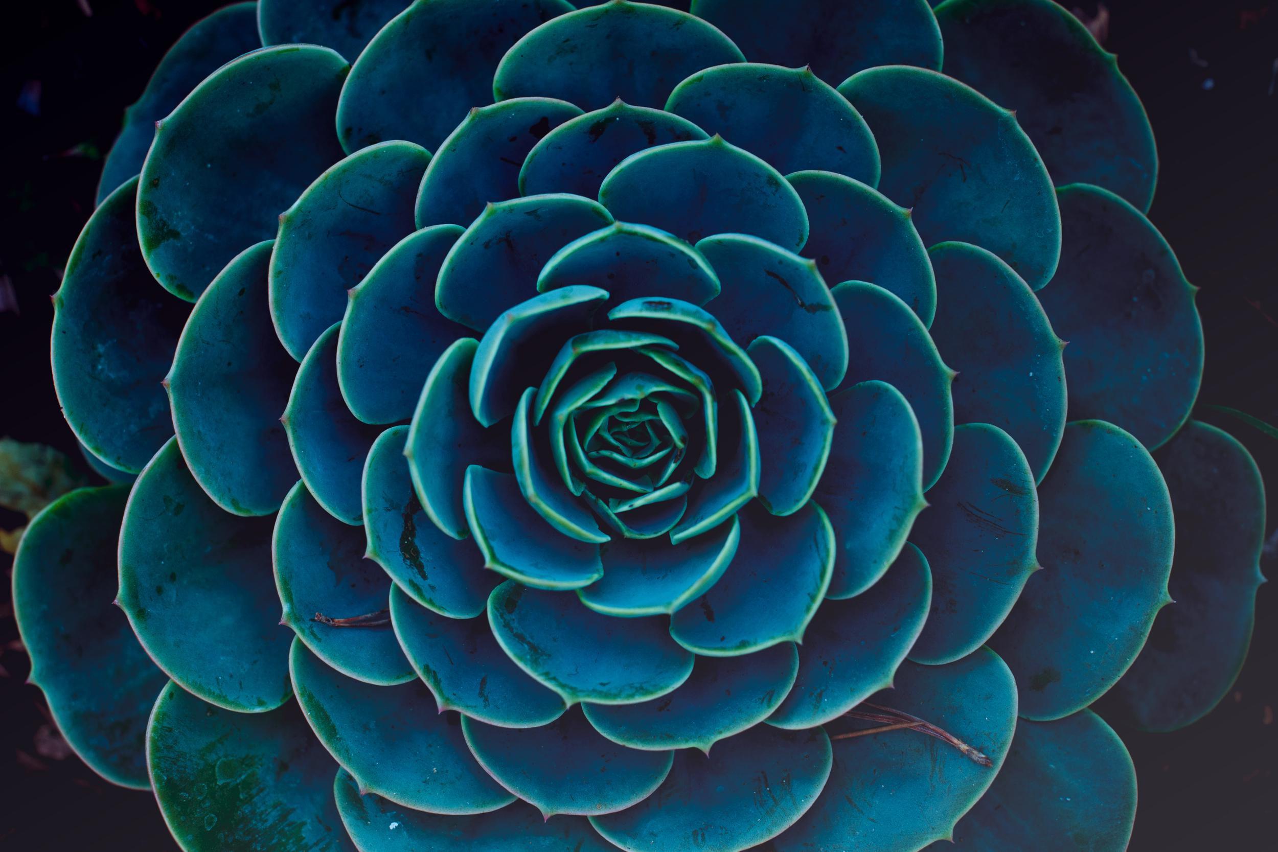 Succulents 01.jpg