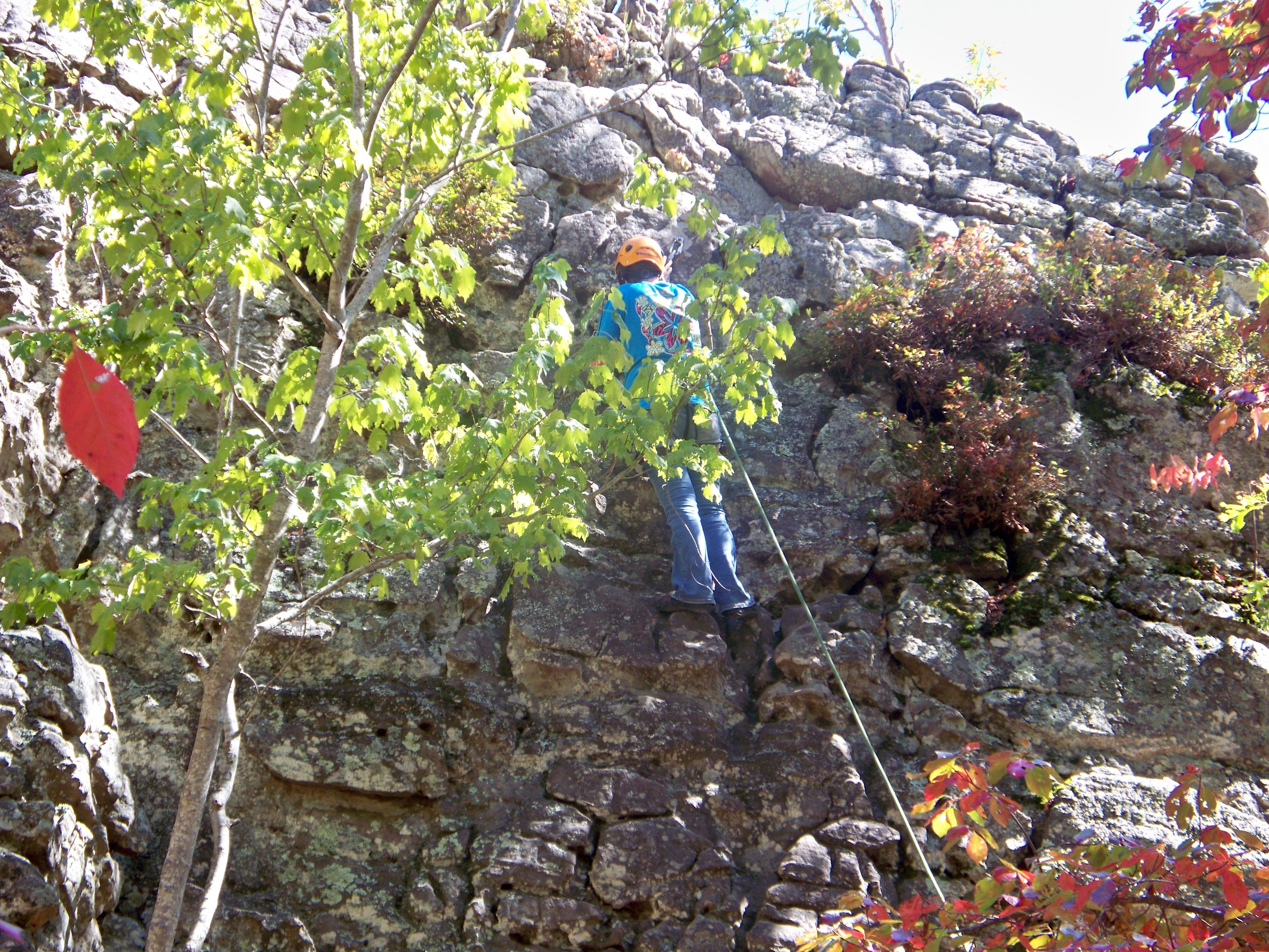 Katie climbing to the treetops on the bluffs