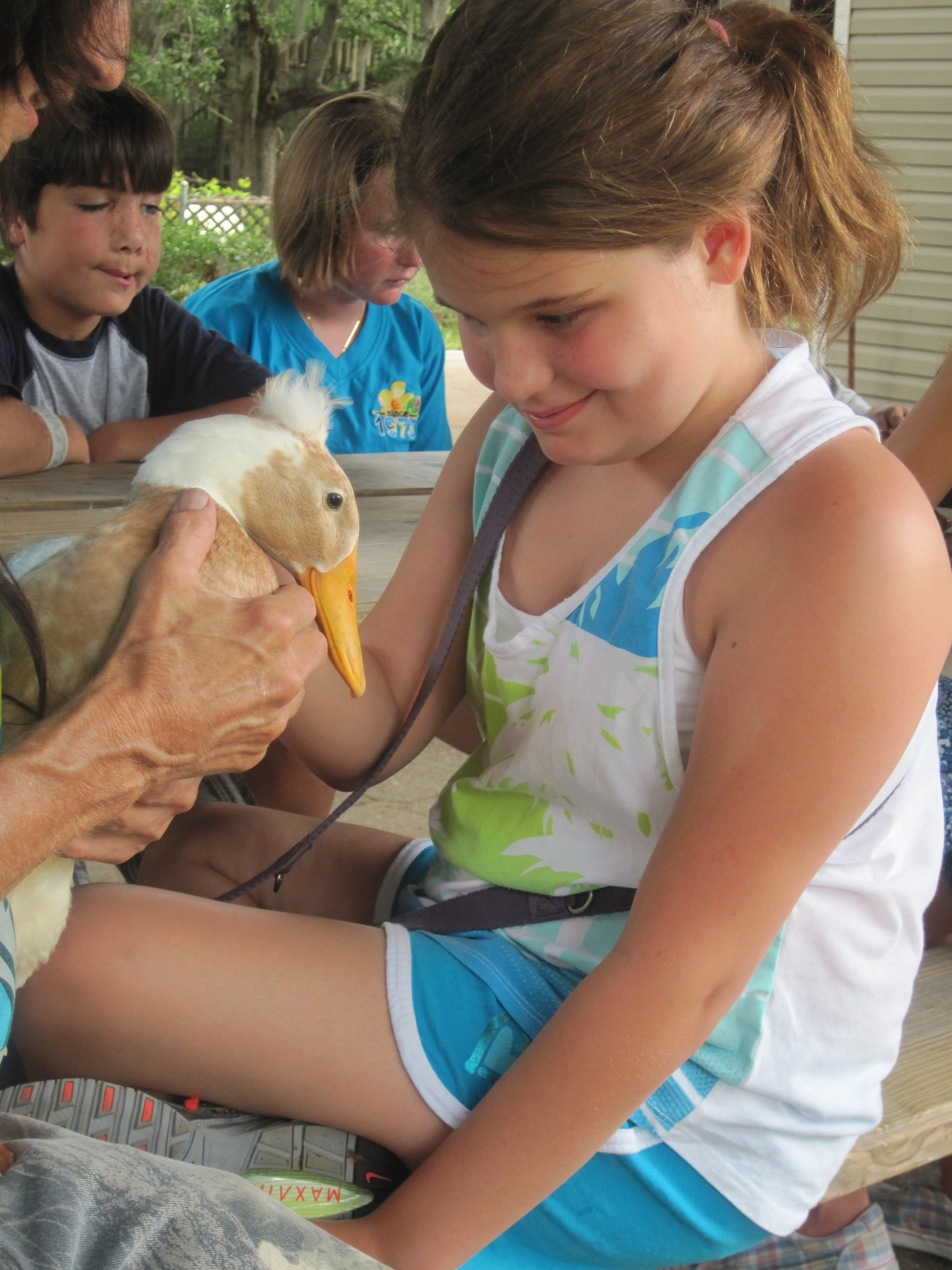 animal safari: Imilie pets a duck