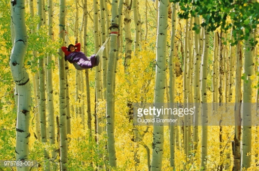 975763-001-woman-lying-in-hammock-suspended-from-aspen-gettyimages.jpg