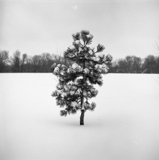 Little tree 1
