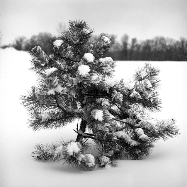 Little tree 2