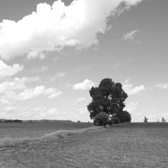 Ottawa valley field