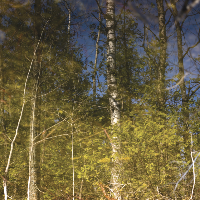 Forest refections 2