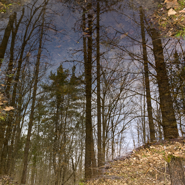 Forest refections