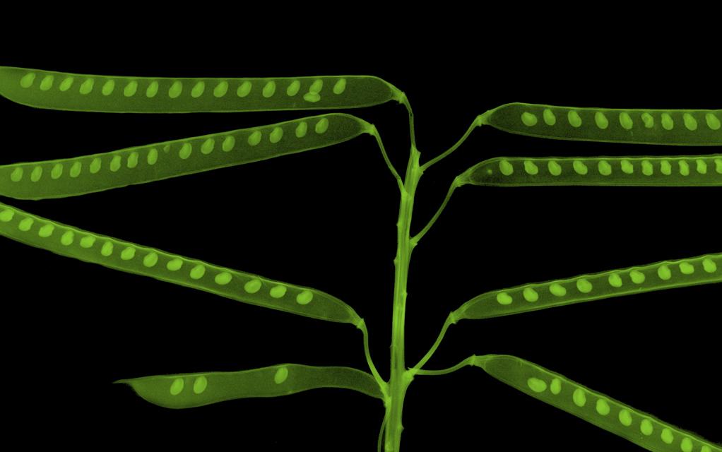 07  beans_Black_small green.jpg