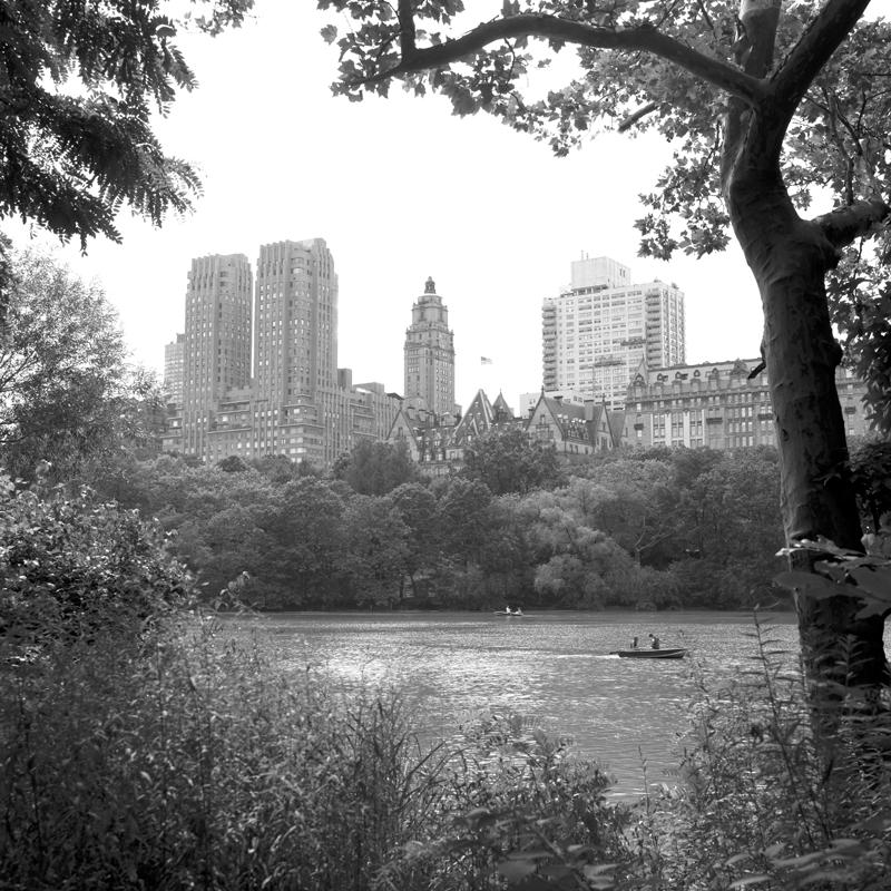 buildings through trees.jpg