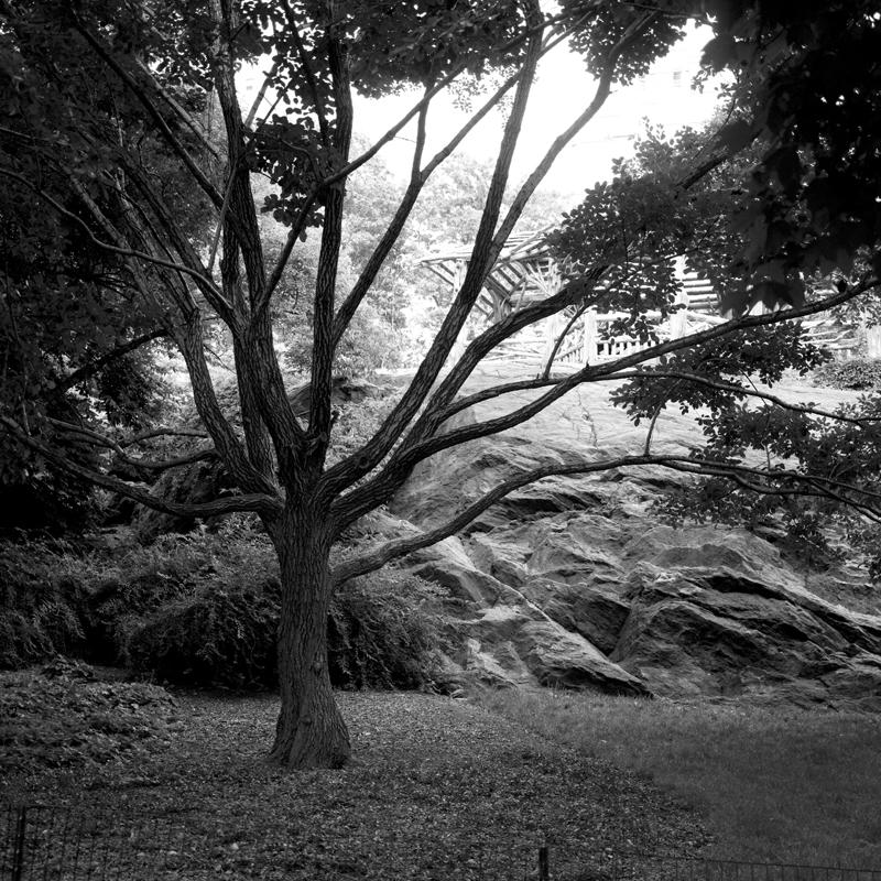 Central Park tree limbs.jpg