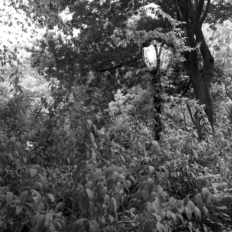 overgrown lamp post.jpg