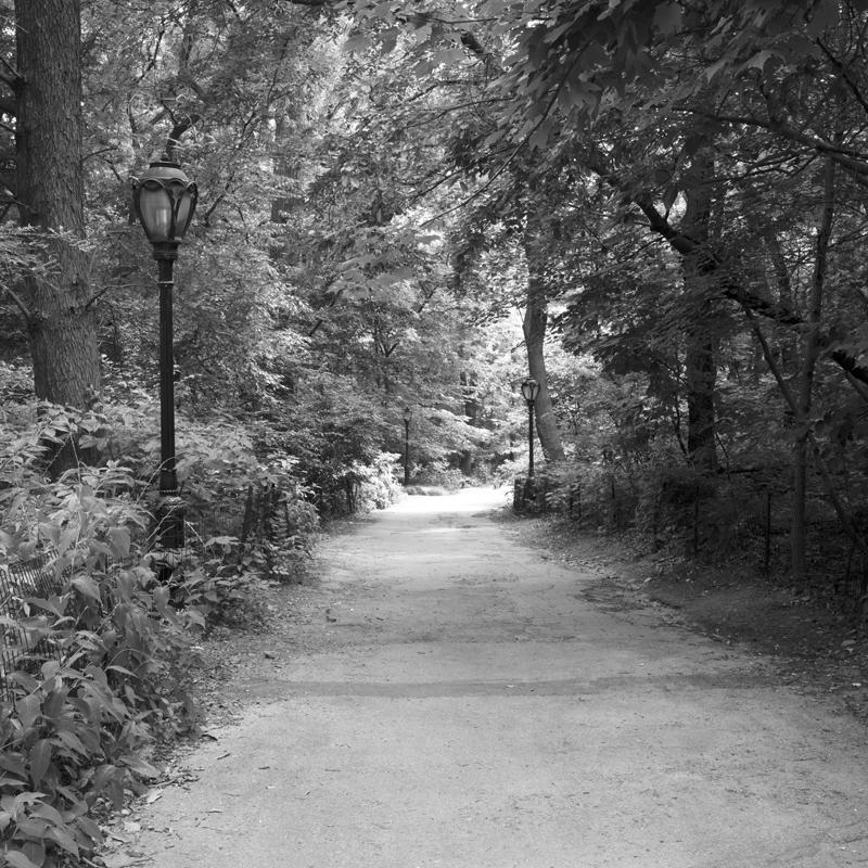 rambling path.jpg