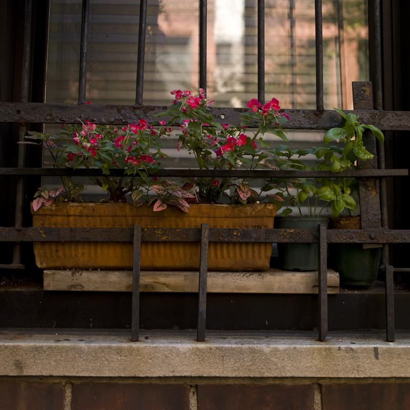 village flowers color.jpg