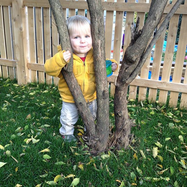 #tbt to Wyatt's Between Two Branches phase of picture posing. #everytime #lilacbaby #thosecheeks