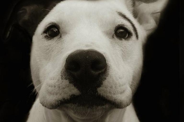 dog21.png