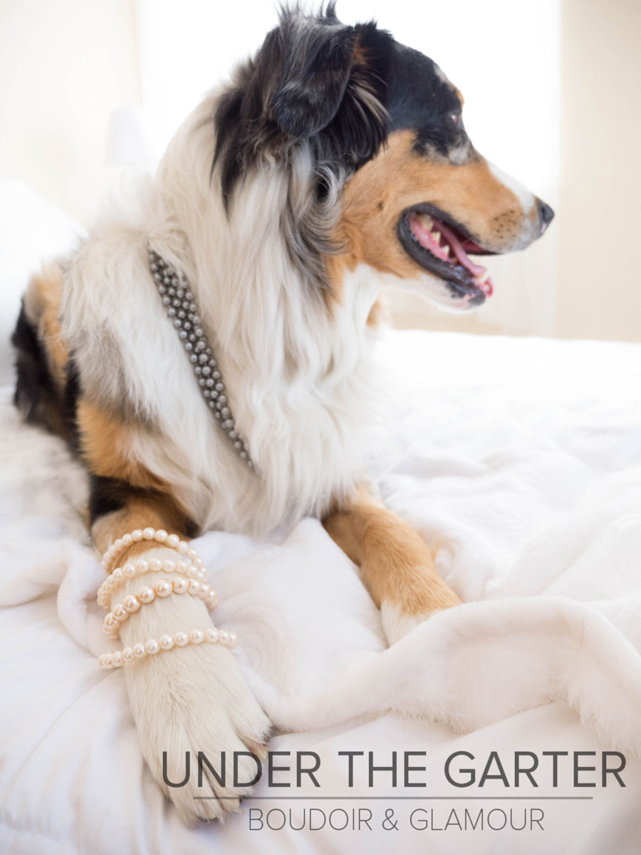 boudoir photography denver dogdoir australian shepherd 6.jpg