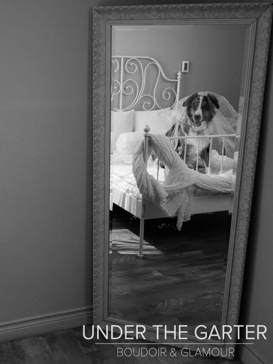 boudoir photography denver dogdoir australian shepherd 10.jpg