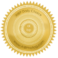 AIBP Daily Choice Winner Seal