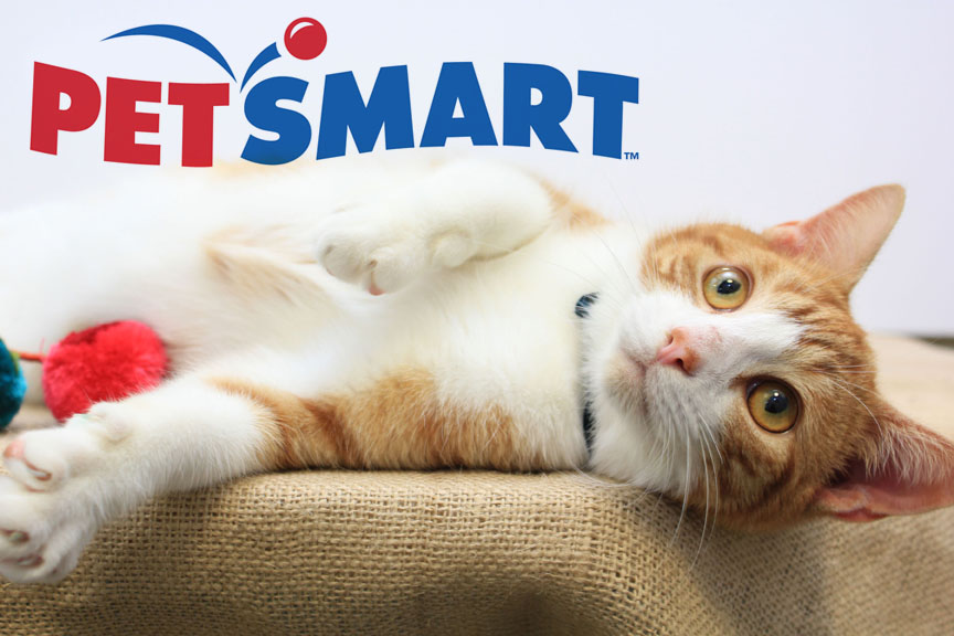 Regency Petsmart houses and adopts ACPS cats and kittens. Swing by and adopt a new best friend!