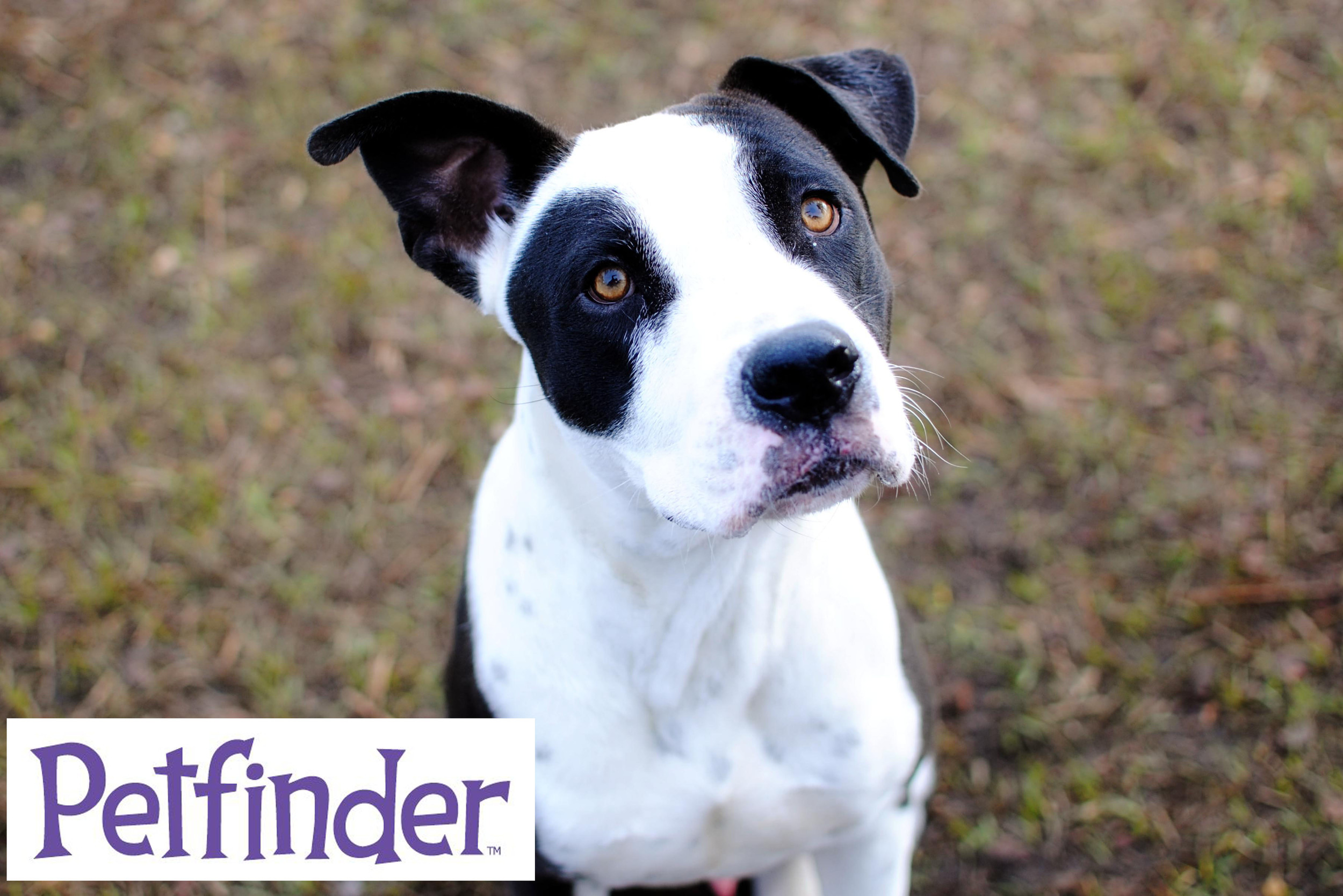 Many of our shelter animals are currently in foster care, you can check them out here and contact their foster parents directly to schedule a meet and greet!