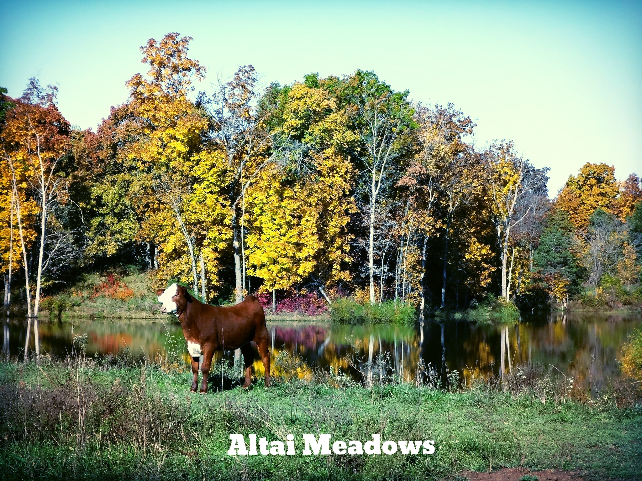 Used with permission from Altai Meadows