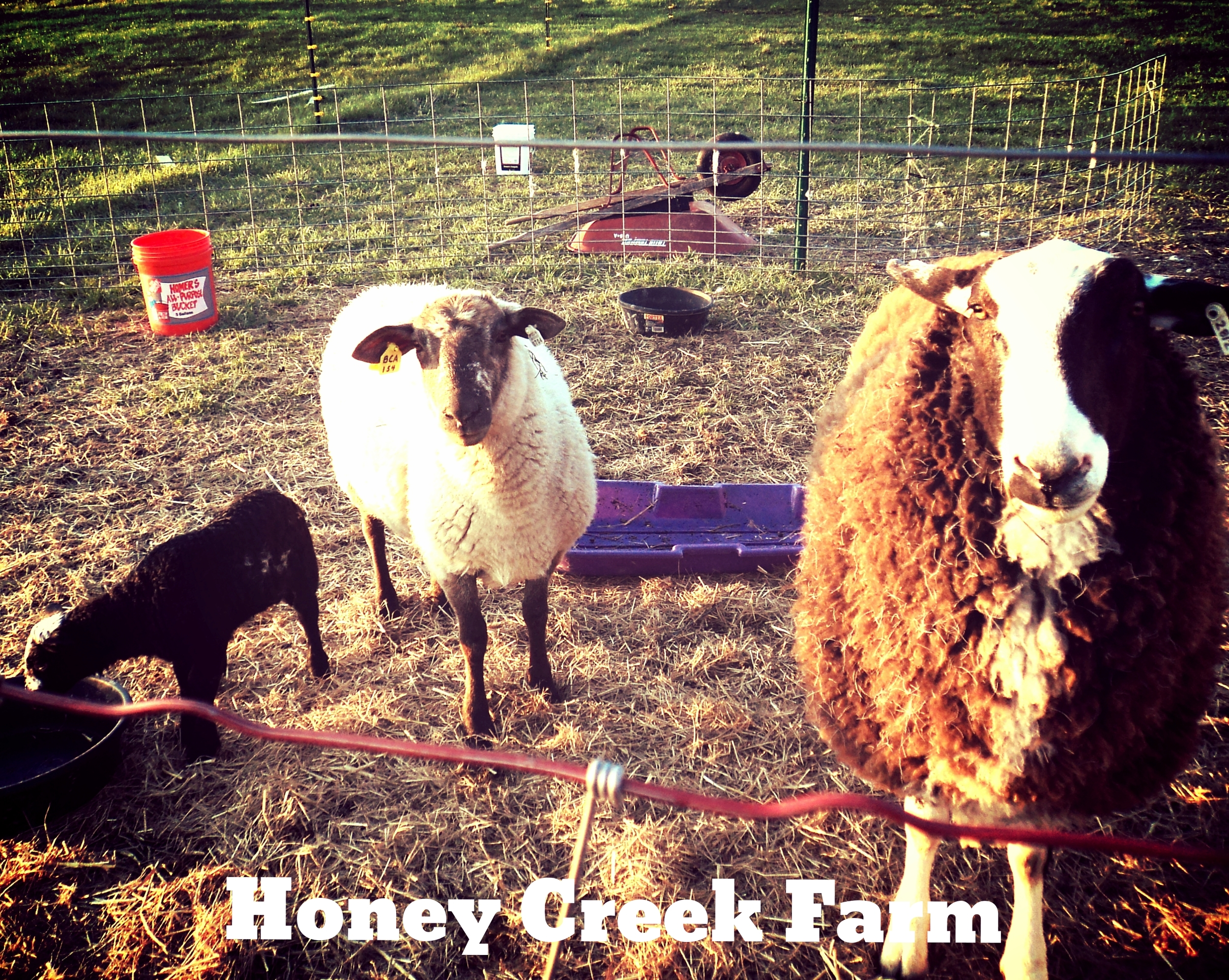 Used with permission from Honey Creek Farm