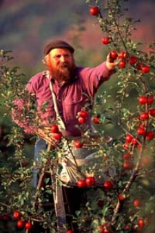 Michael Phillips   Author of The Holistic Orchard & The Apple Grower