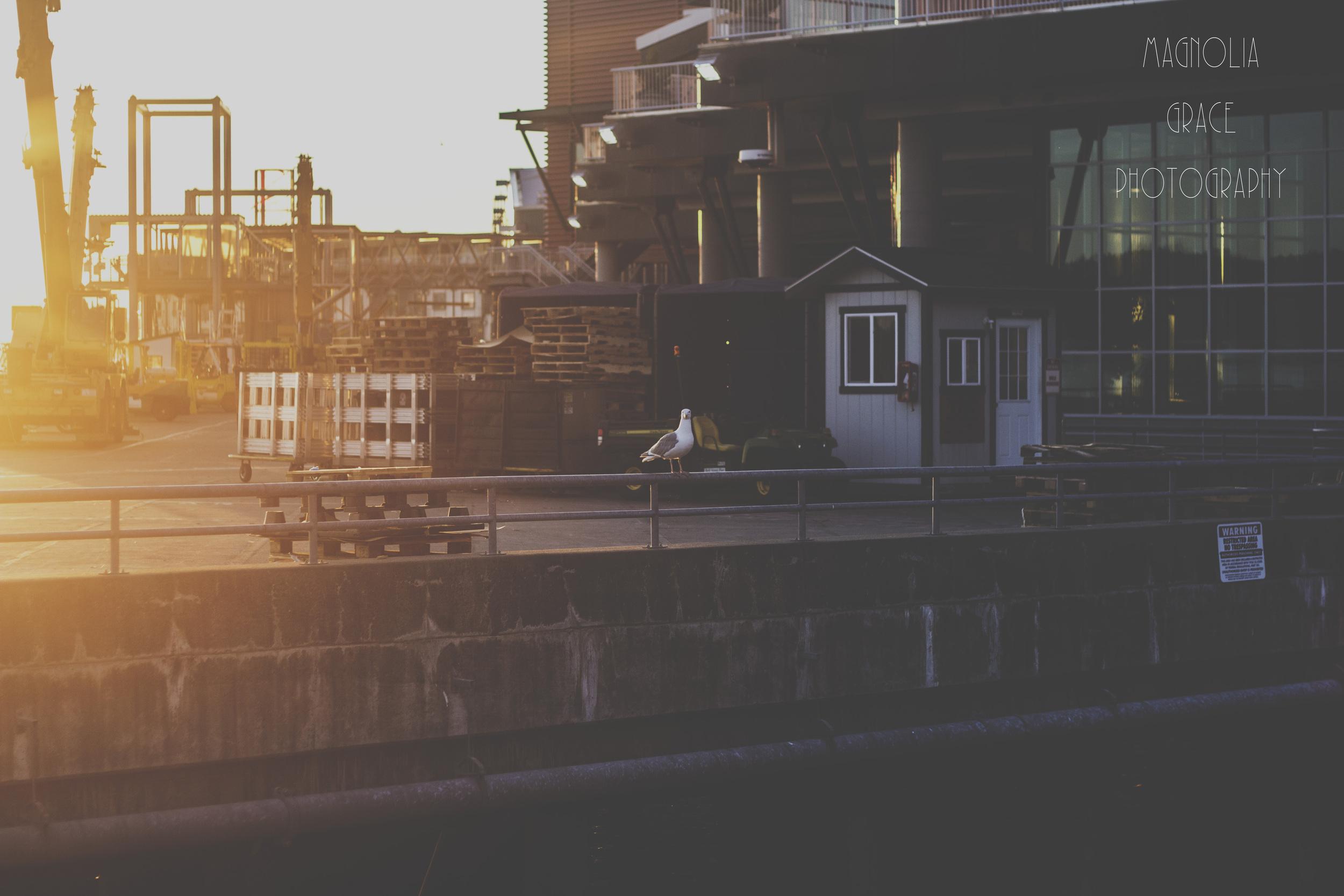 Seattle Washington | Magnolia Grace Photography