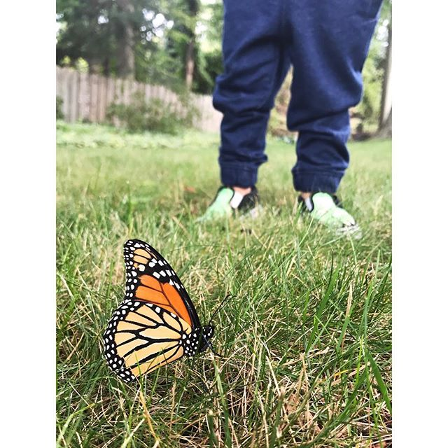 Teeny feet all around. Just a bunch of little explorers, really. 👦🔎🦋