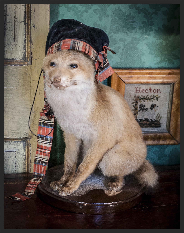 Mounted fox wearing a Scottish tam needlework dog -- Hector.  Linda Kay McCloy - alittleenglishinteriors.com