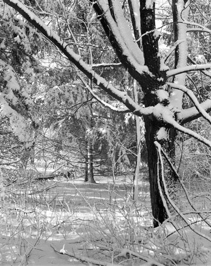 Fresh Snowfall II