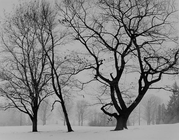 Park in January