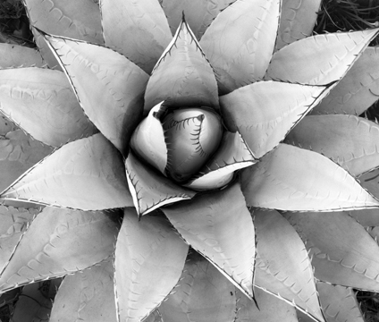 Plant 3 Boyce Thompson AZ