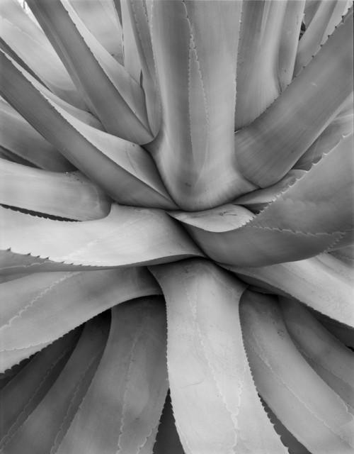 Plant II