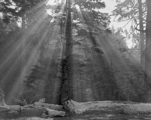 Suns Rays Washington