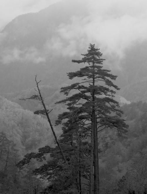 Trees Toroko Gorge