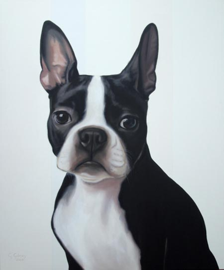 "Boston Terrier 48""x40"""