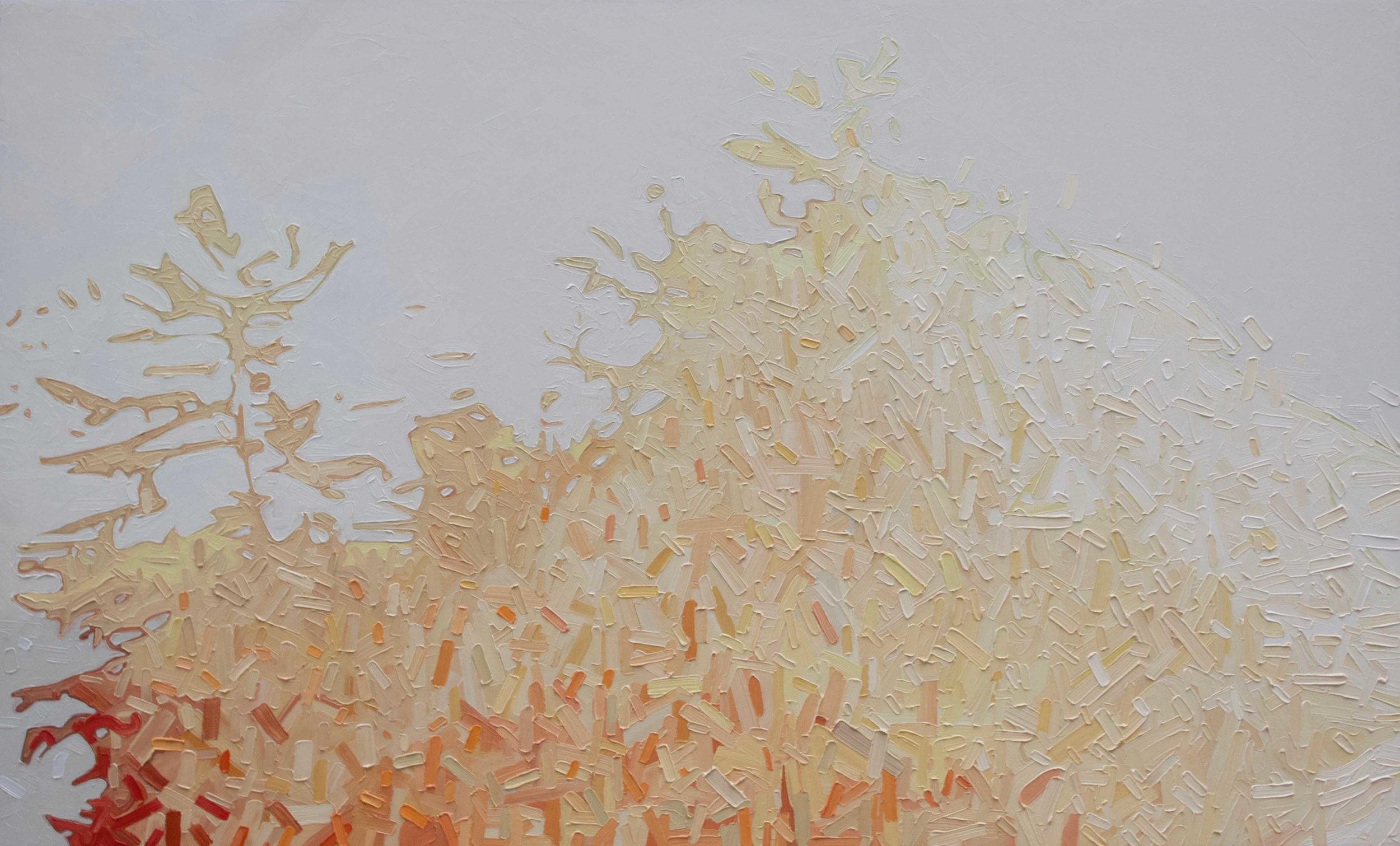 "Warm Morning Glow 2 - 36""x60"""