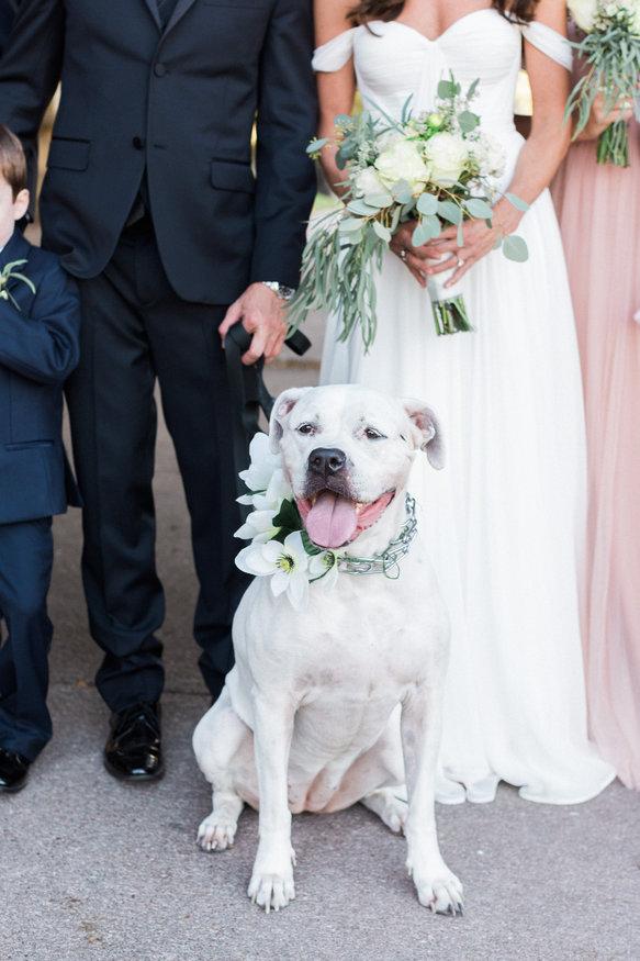 Wedding dog floral collar