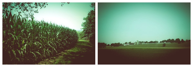 My dad lives near TONS of corn -- delicious!