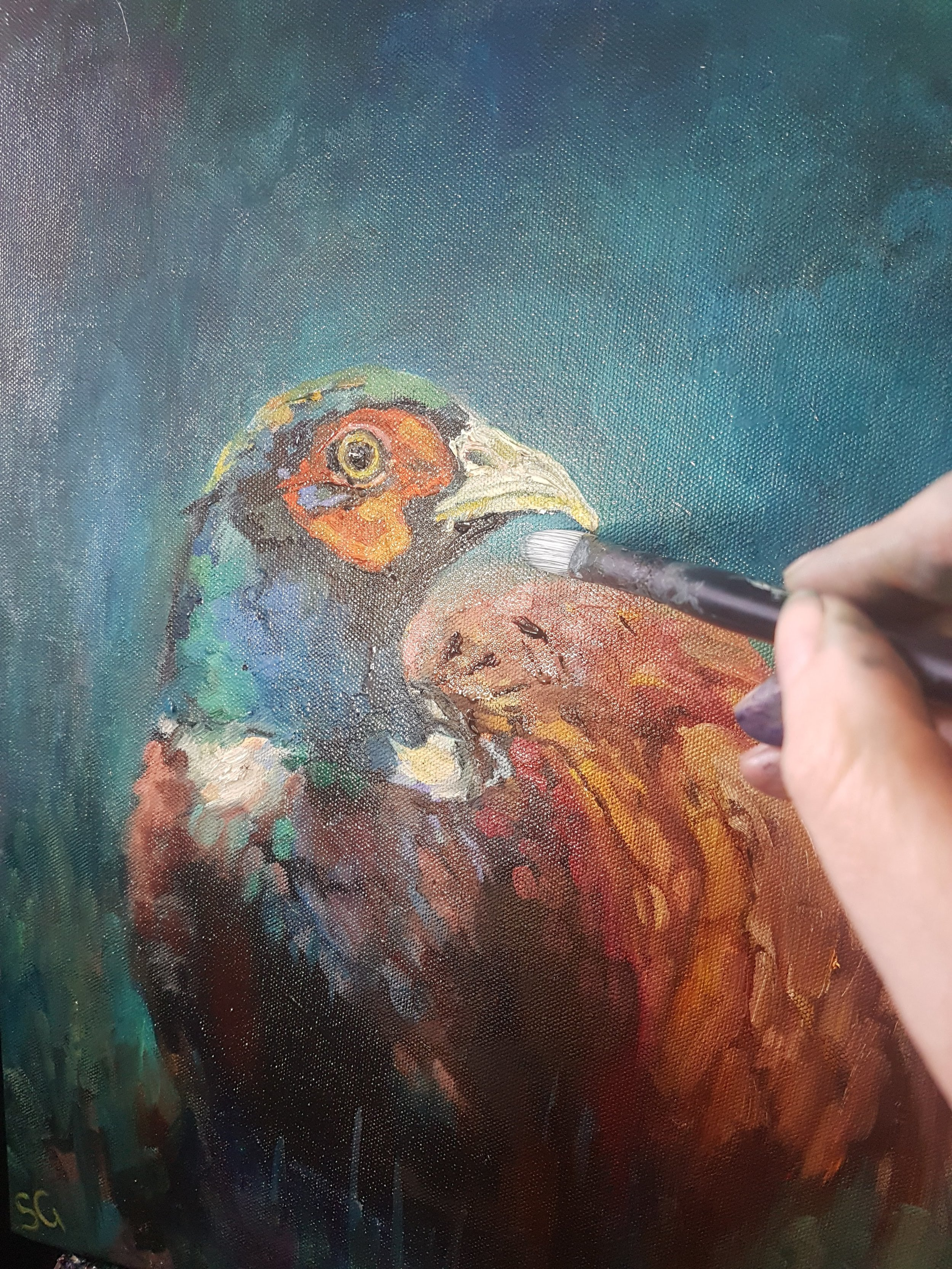 painting a pheasant picture in progress sue gardner