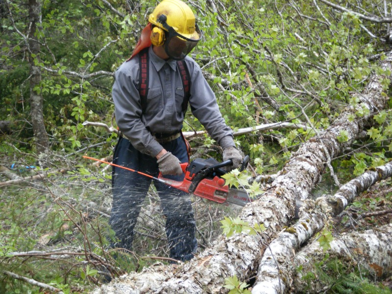 Harvest and Silviculture Standards