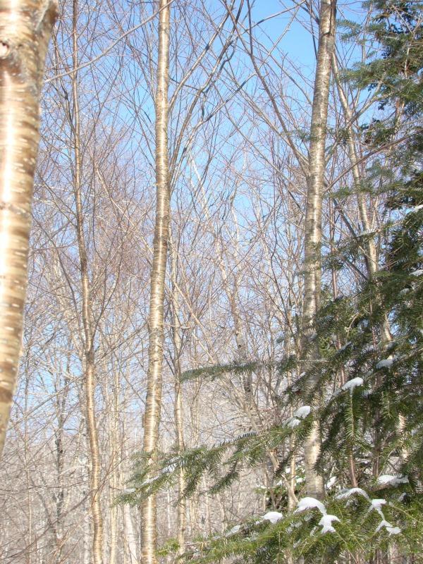 Category 7b - Crop Tree Pruning
