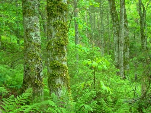 Forest Ecosystem Classification (FEC)