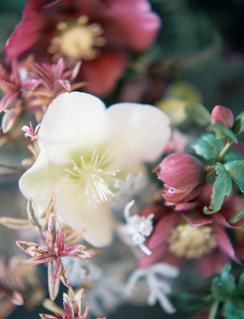 Taylor & Porter_The Garden Gate Flower Company Website_07.jpg