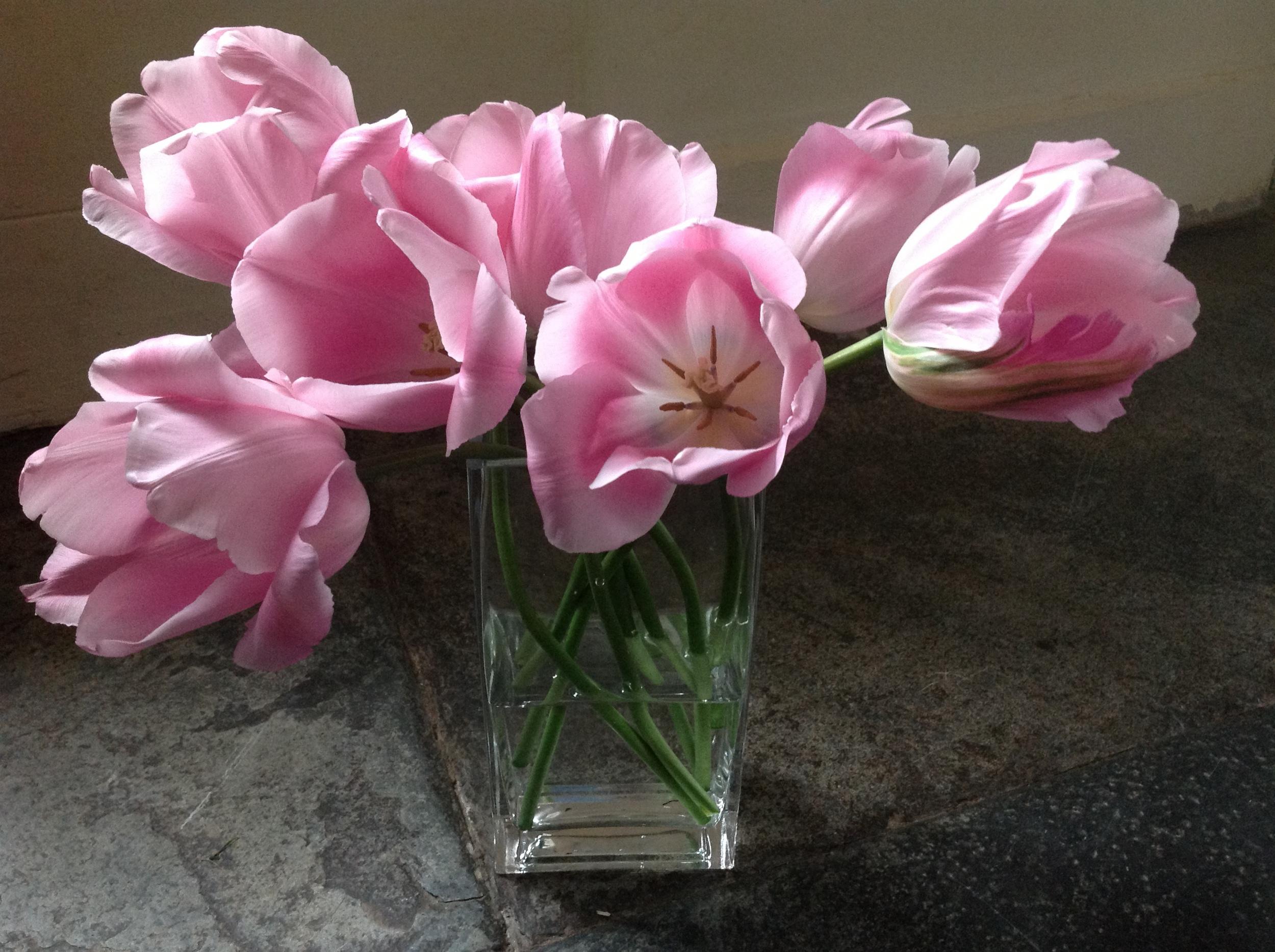 The Garden Gate Flower Company - home grown organic tulips