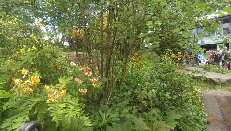 martagon lilies dan pearson's chatsworth garden winner chelsea 2015