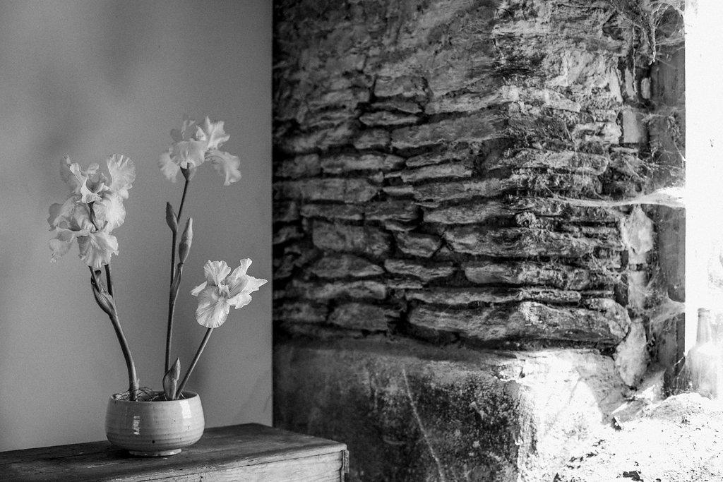 Image by John of Holes in the World - Bearded Iris - British Flowers