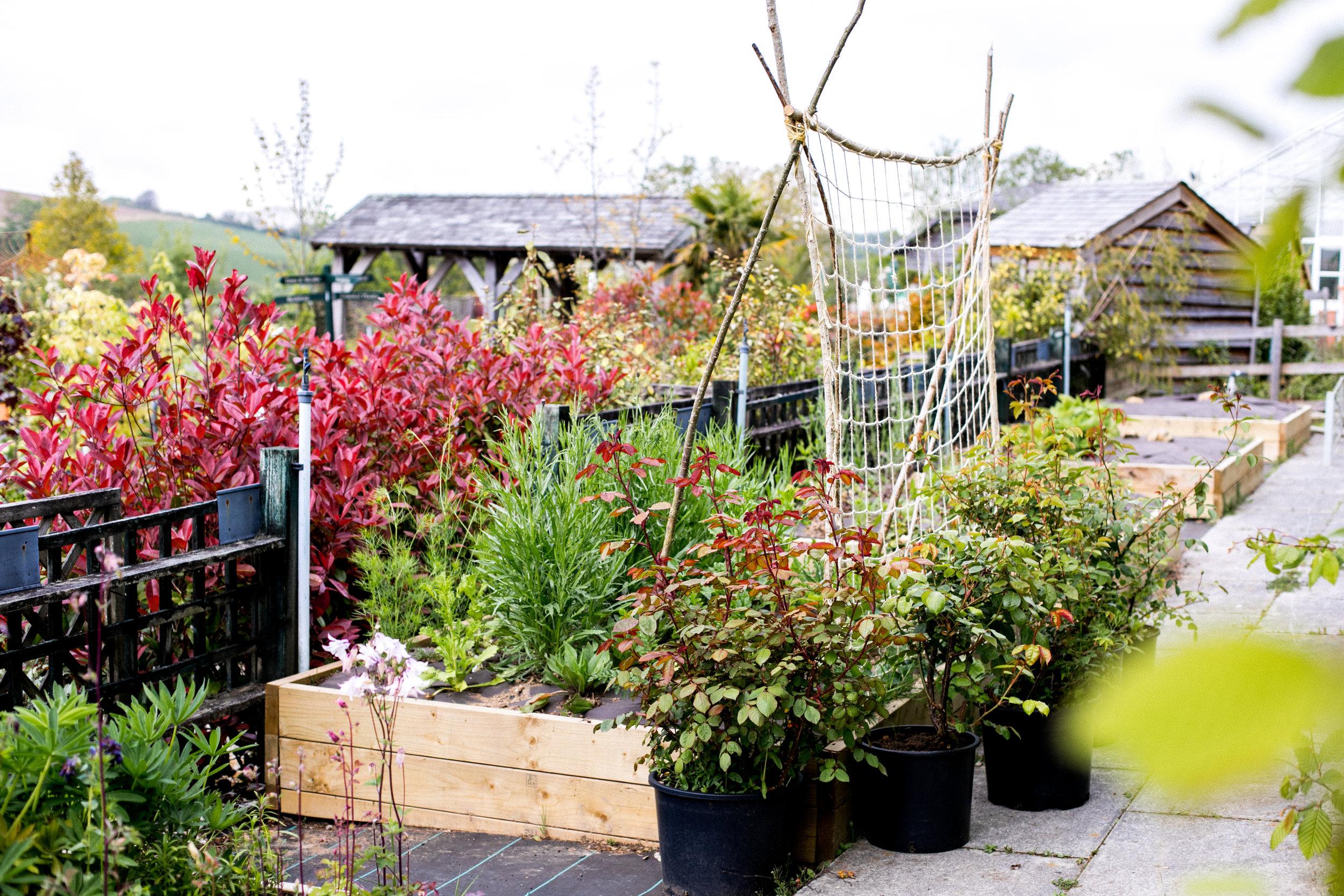 Growing wedding flowers at Duchy of Cornwall Nursery 'Now'