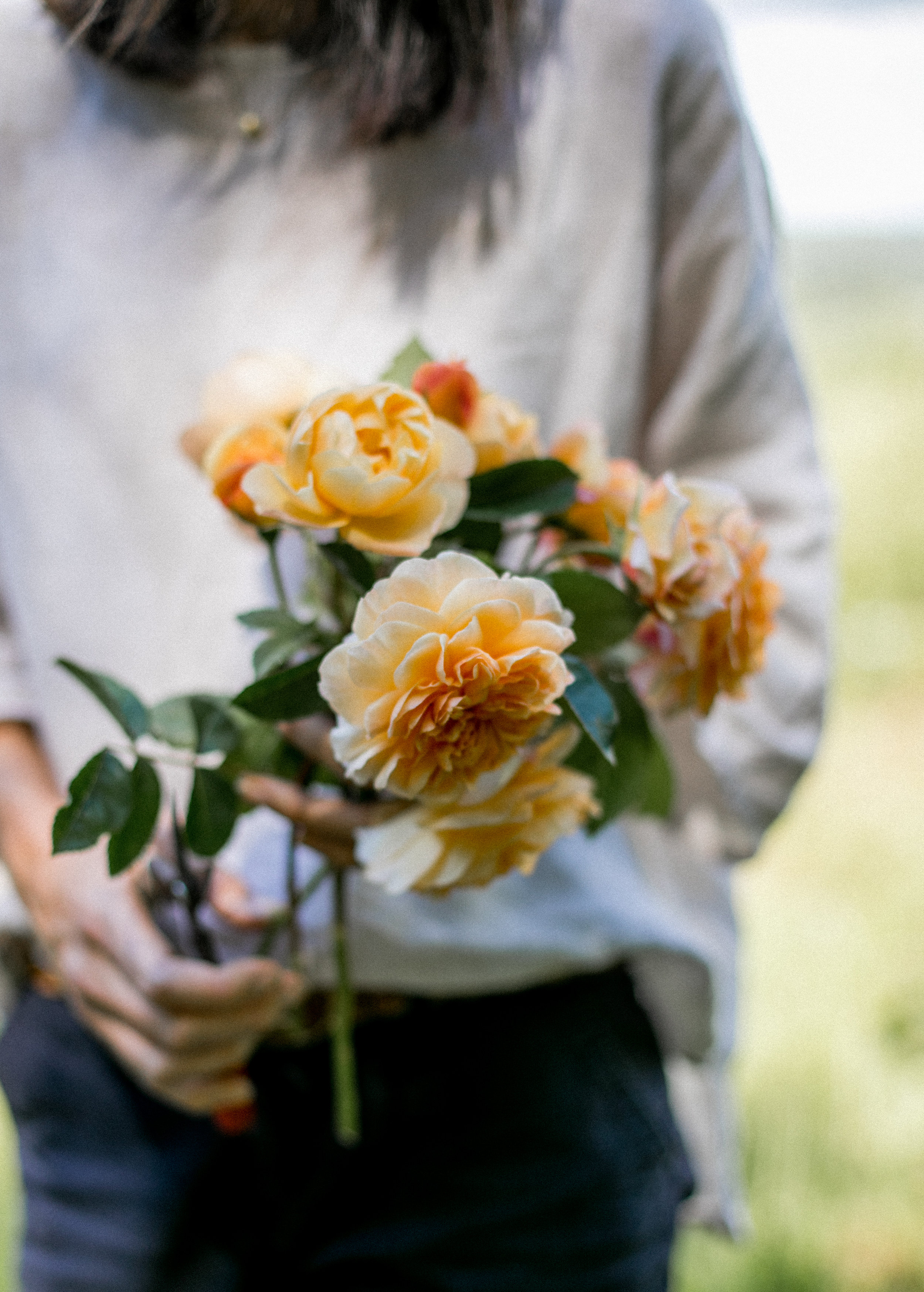 Roses-32.jpg