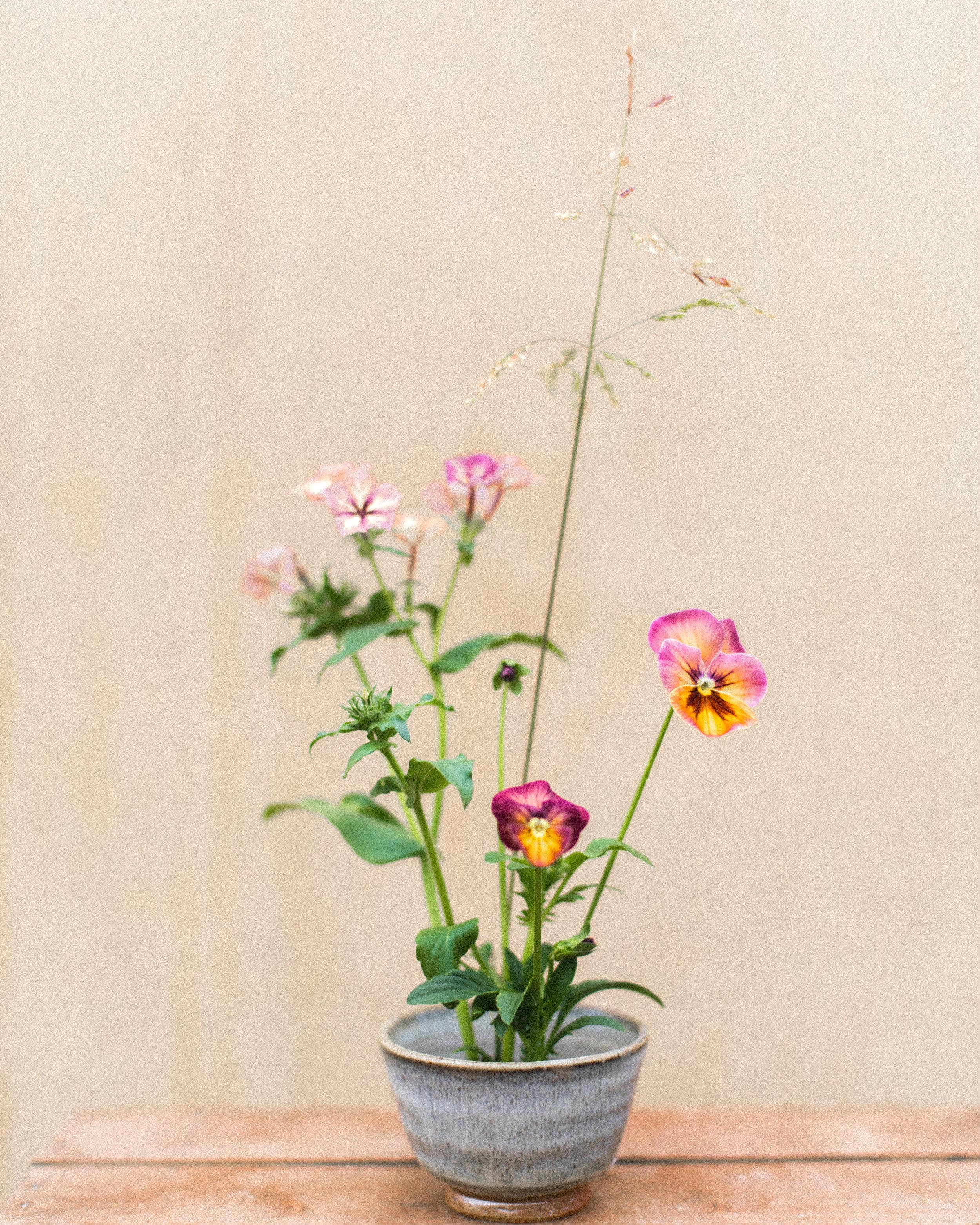 Floret seed viola